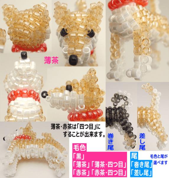 柴犬 詳細1