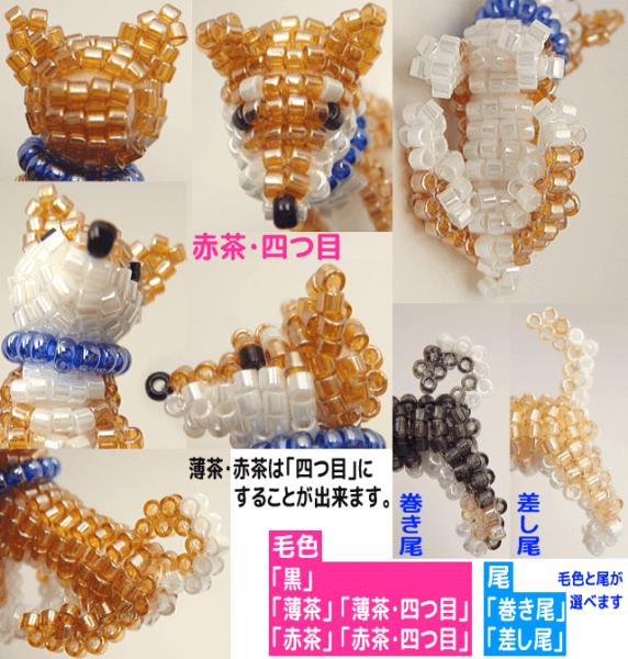 柴犬 詳細3